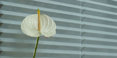 Pleated Blinds 6