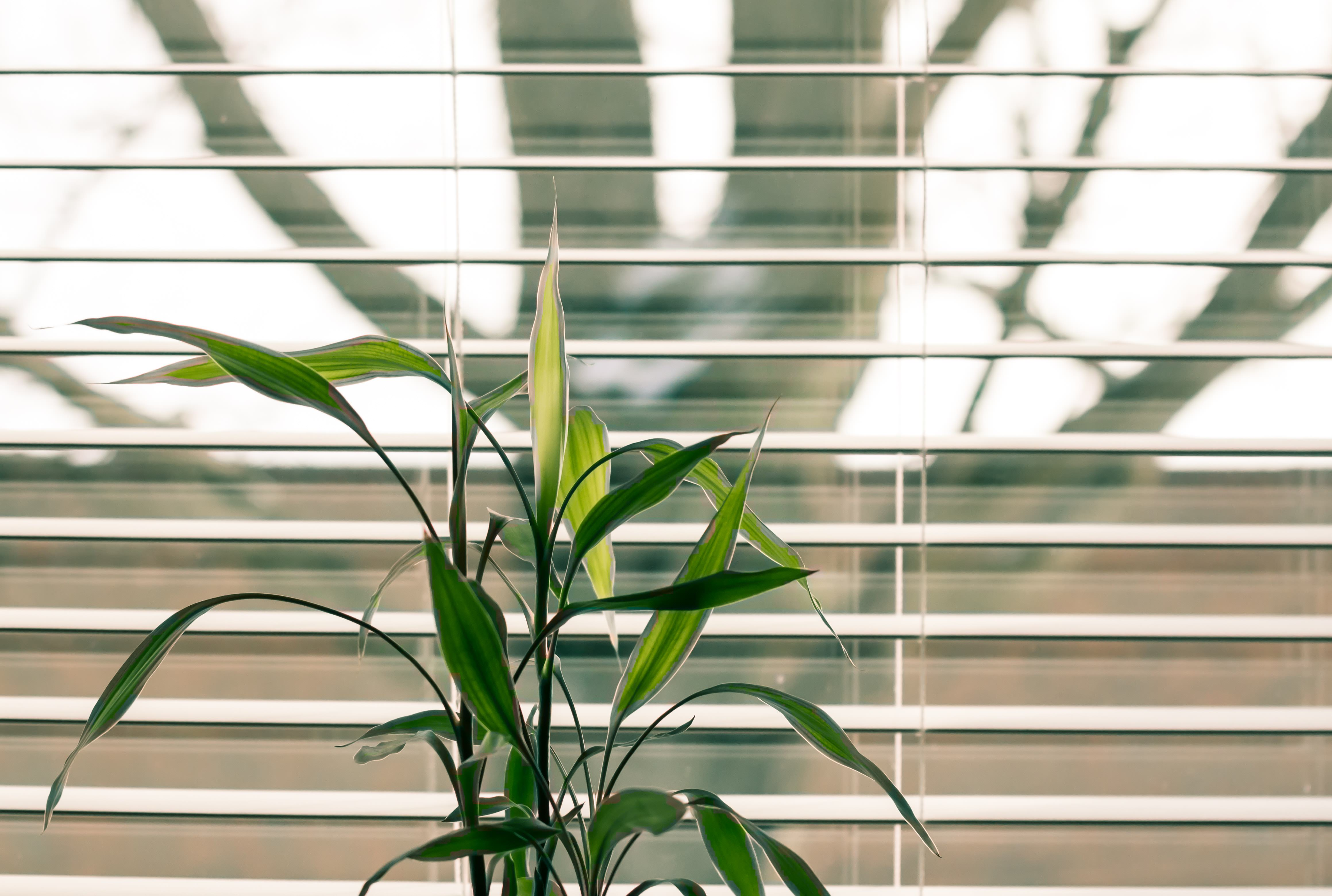 An image of Venetian blinds installed at a window to keep the sun light out.